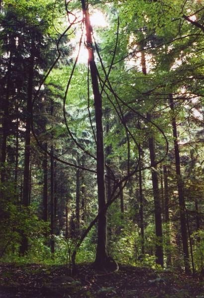 Mohren,Thomas-nummer02,2006,5+2a.p.